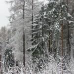SNB182763 150x150 W Szklarskiej Porębie już zima