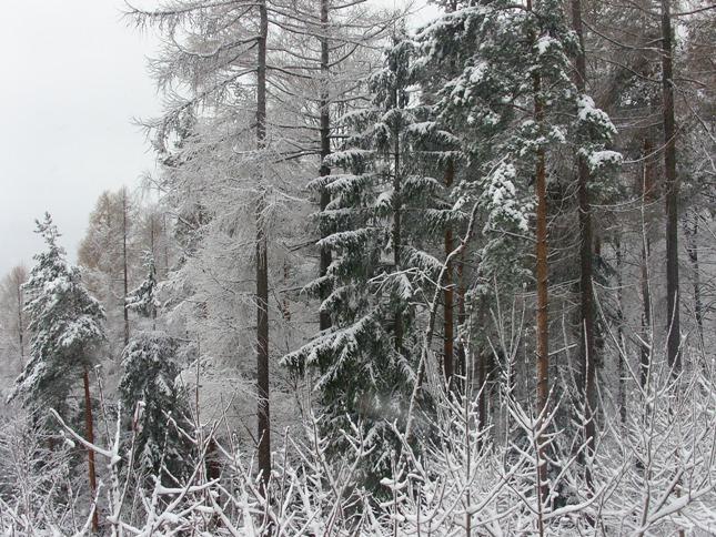 SNB182763 W Szklarskiej Porębie już zima
